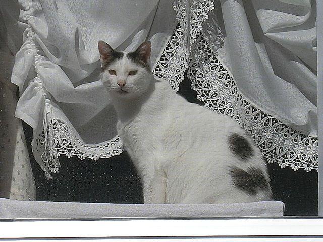 コチラを見るネコ