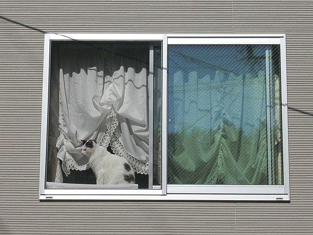 窓辺に佇むネコ