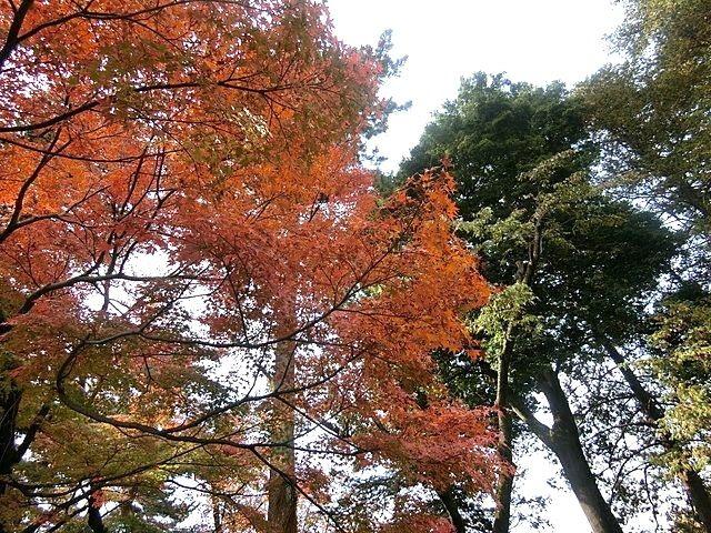 色づき始めた小金井公園の樹々