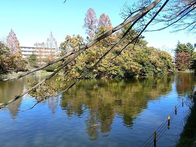 武蔵関公園池
