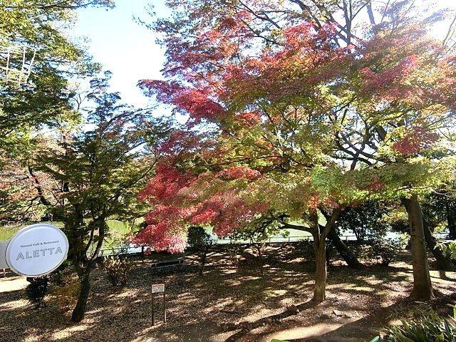 武蔵関公園の遊歩道2