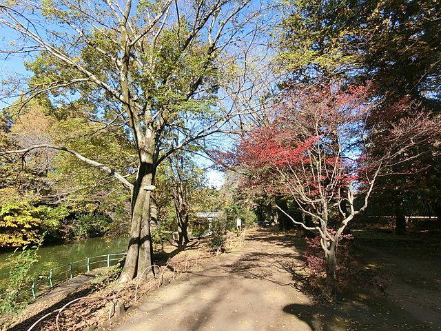 武蔵関公園の遊歩道