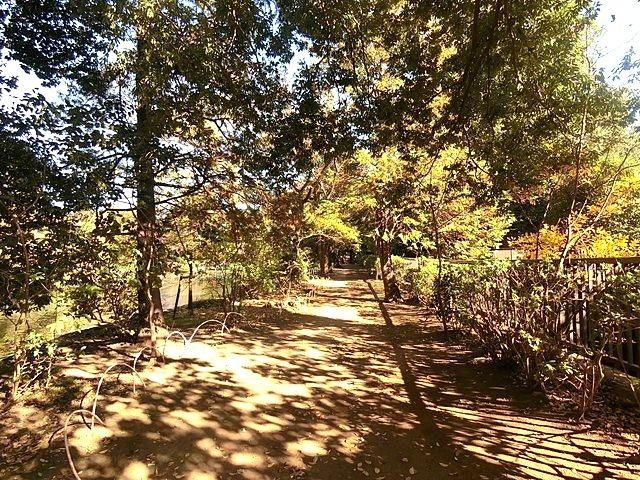 武蔵関公園の遊歩道3