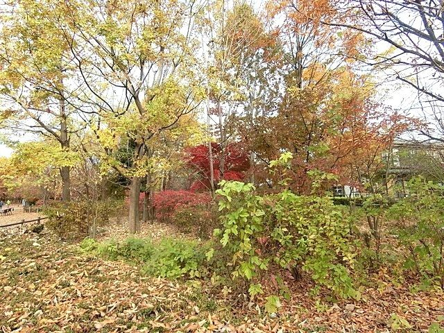 いこいの森公園の紅葉3