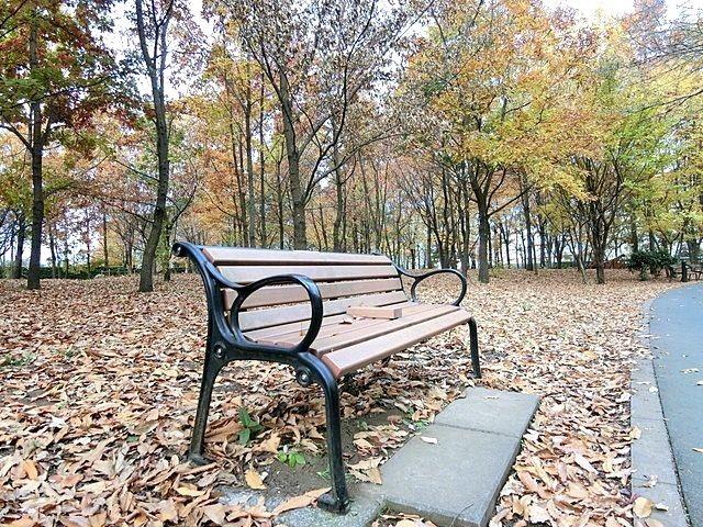 いこいの森公園の紅葉とベンチ