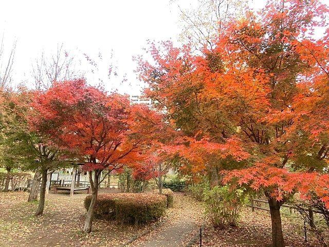 いこいの森公園の紅葉4