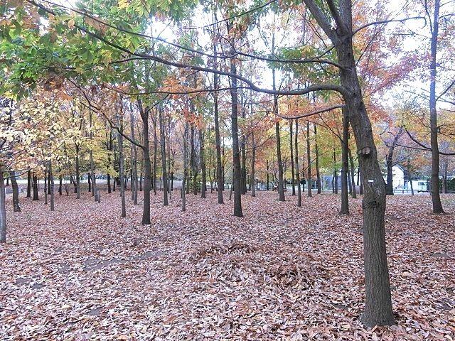 いこいの森公園の紅葉