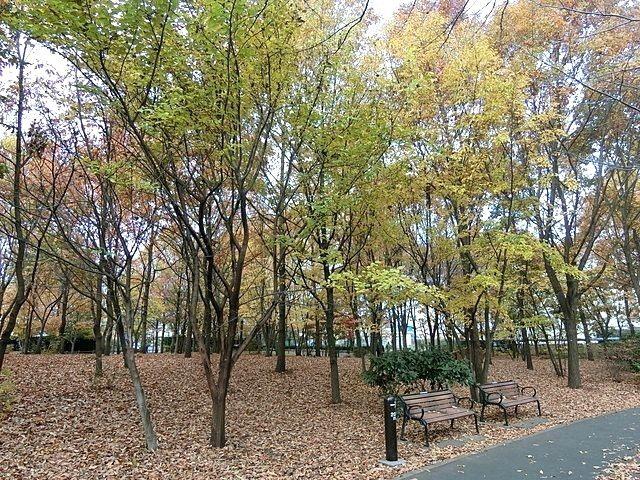 いこいの森公園の紅葉2