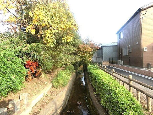 紅葉する千川上水の様子