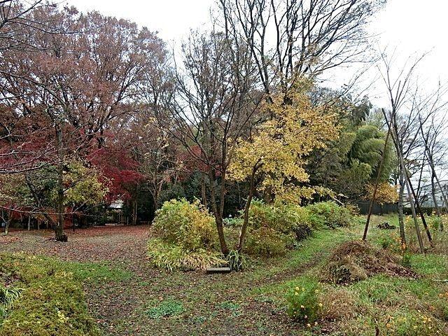 屋敷林の紅葉2