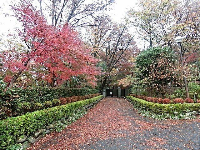屋敷林の入口