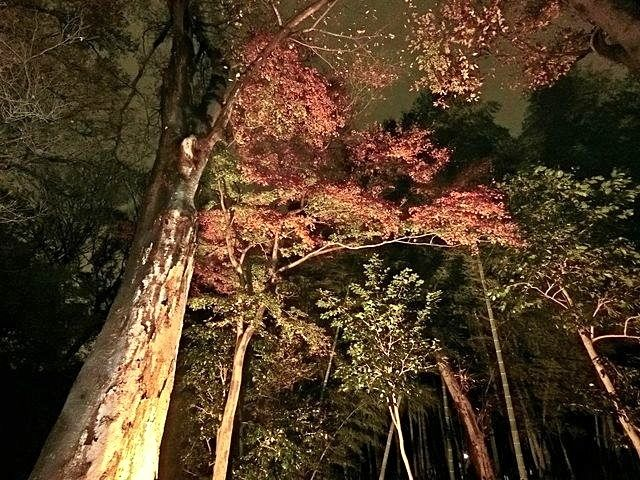 下保谷特別緑地保全地区紅葉する樹々2