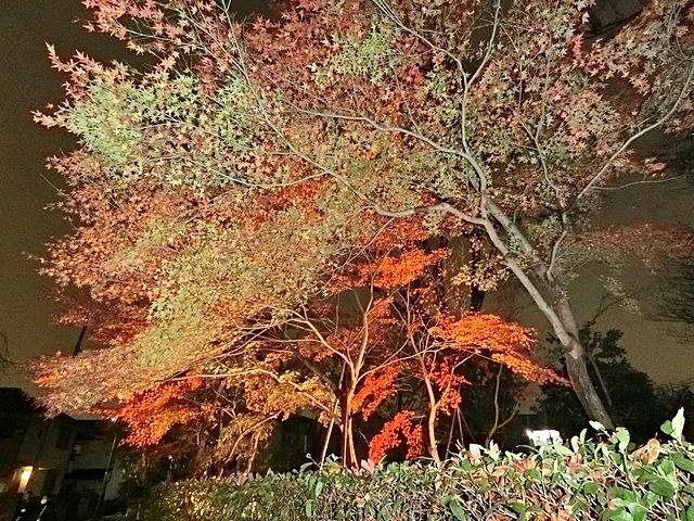 下保谷特別緑地保全地区の紅葉