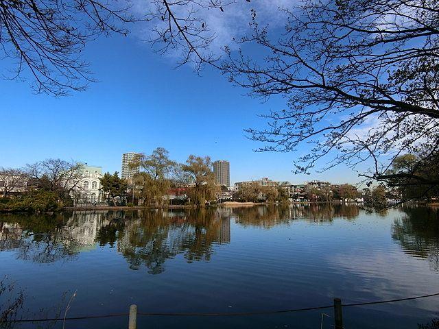 12月19日の石神井公園ボート池