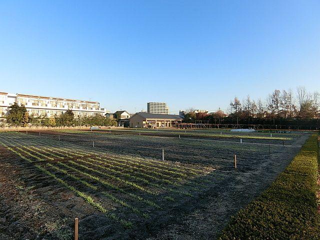 12月21日朝の筑波大学附属小学校保谷田園教場の様子