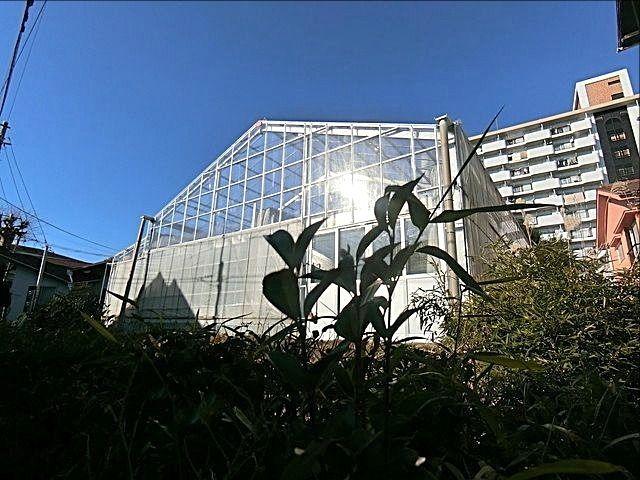 ファーム柳沢の近代的なビニールハウス
