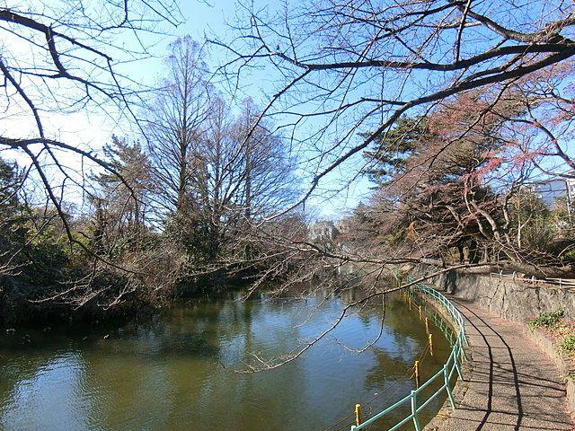 2019年1月4日の武蔵関公園2