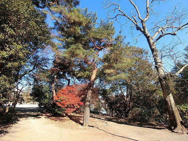 2019年1月4日の武蔵関公園4